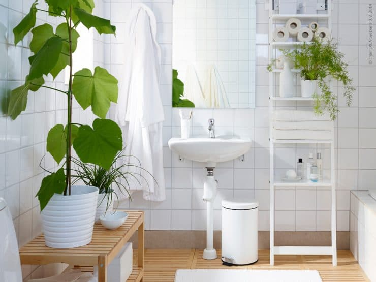 Комнатные растения в интерьере ванной комнаты