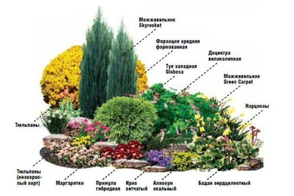 Растения 2